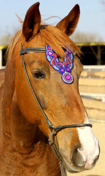 Blue bling horse browband