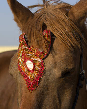 Horse jewelry for show browband №49244