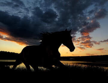 Horse silhouette on sunset. №49236