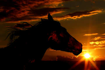 Horse silhouette on sunset. №49237