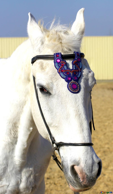 Blue bling brow band horse browband №49240