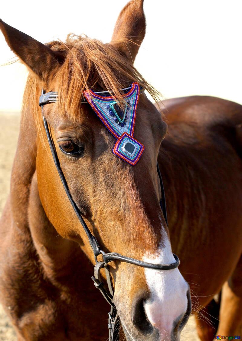 Blue crystal horse browband №49242