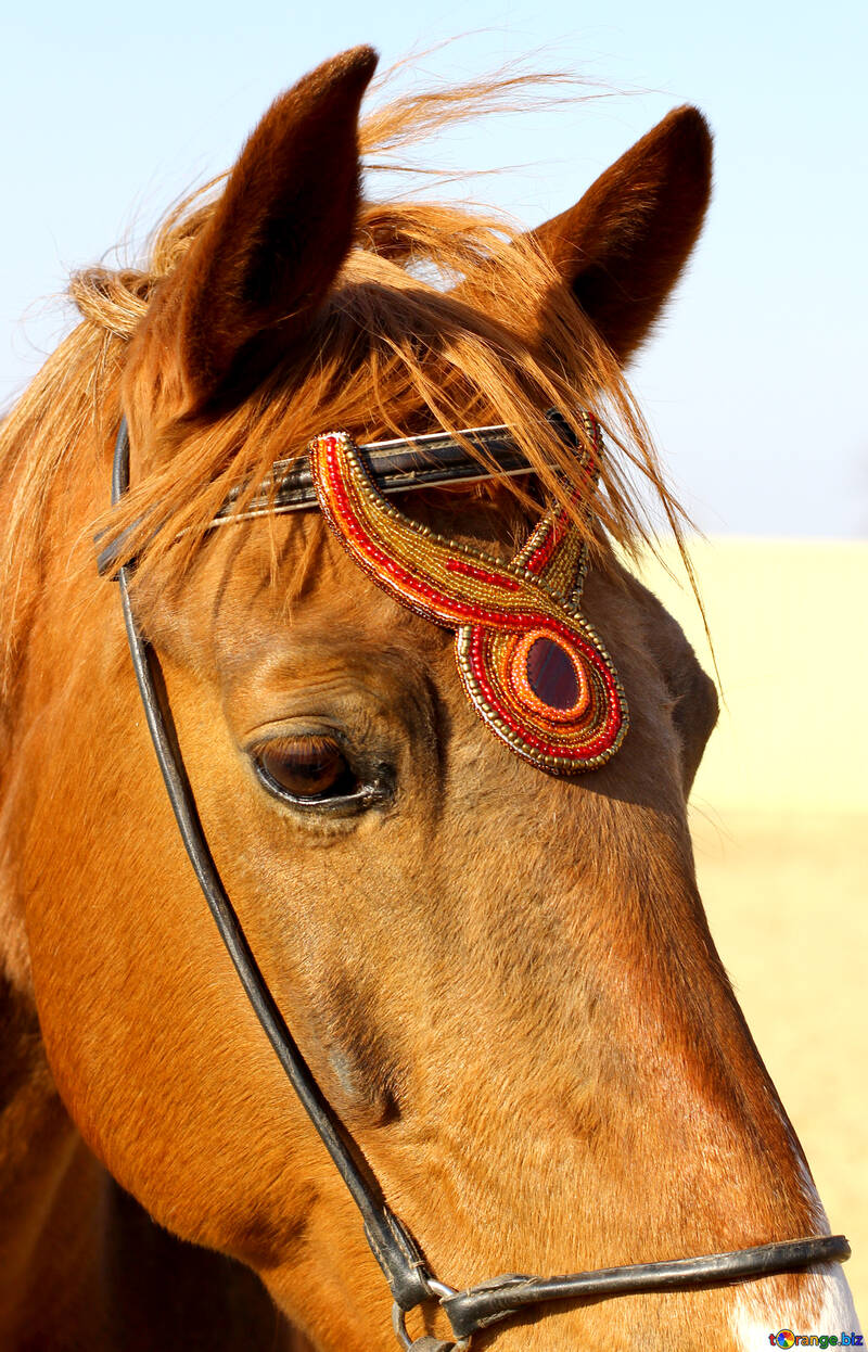 Handmade horse Browband №49245