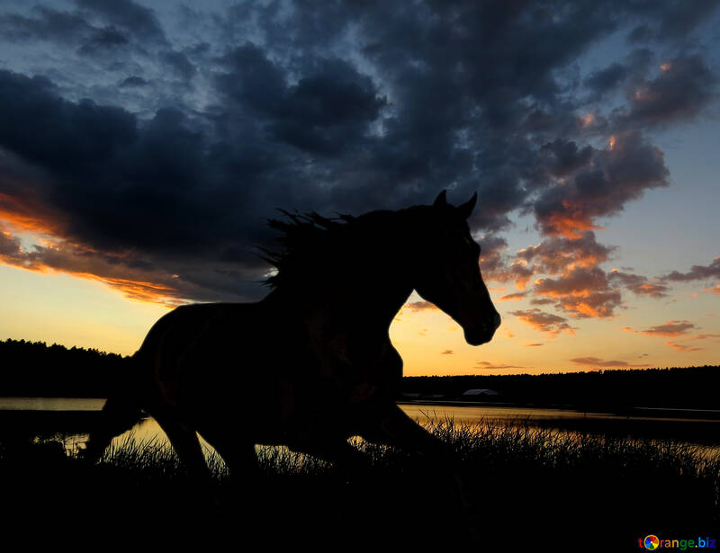 Silueta del caballo en puesta del sol. №49236