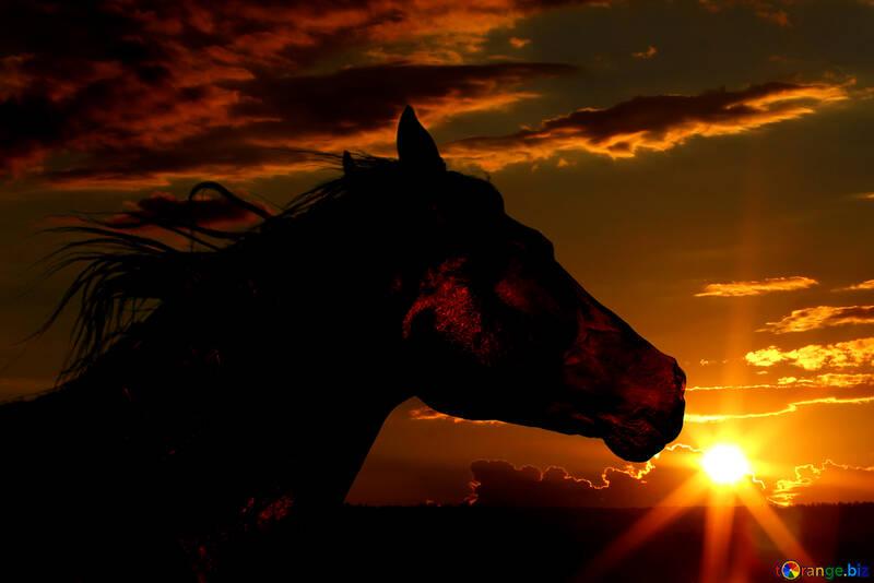 Silueta del caballo en puesta del sol. №49237