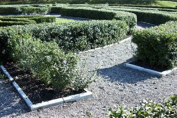 Green  maze №5713