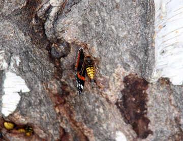 Hornet prey on the butterfly №5460