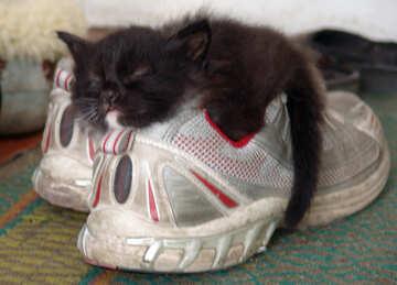 Cheap Shoes №5404