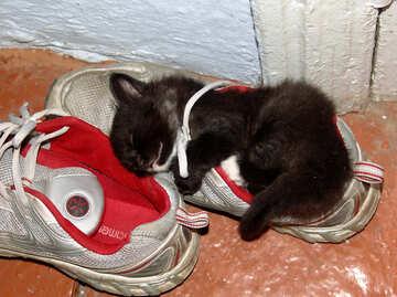 The kitten sleeps in sneaker №5406