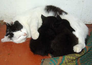 Cat feeding kittens №5407