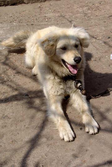 Dog №5405