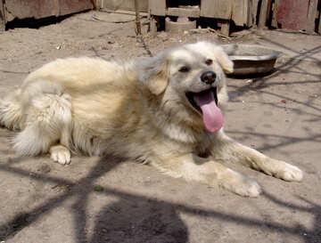 Chain dog №5400