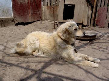 A dog`s life №5401