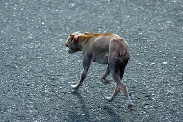 Small dog №5129