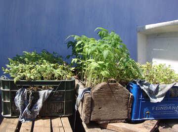 Hardening  seedlings №5286