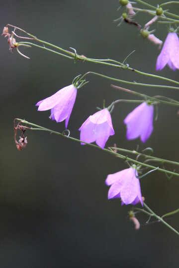 Flower bell №5538