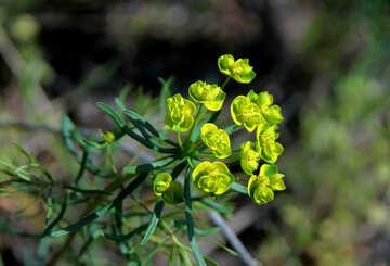 Little yellow green flower №5167