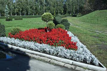 Kombination von Blumen an Flowerbed №5629