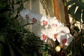 Orchid garden №5789