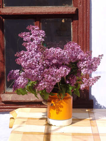 Still. Lilacs in cans. №5305