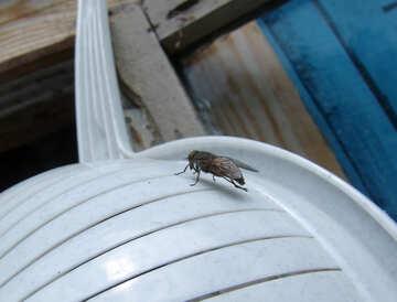 Pest №5821