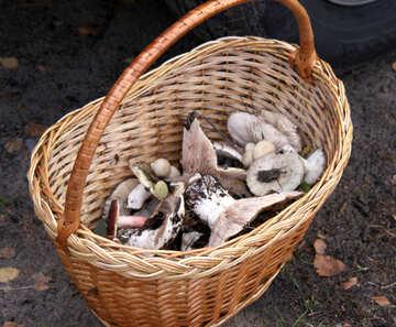 Mushrooms in basket №5446