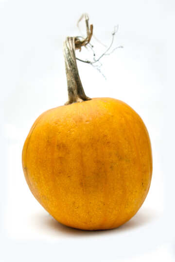 Pumpkin  at  White  background №5984