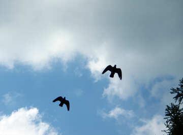Birds flying in the sky №5053