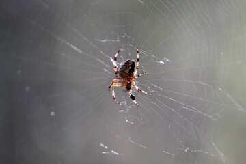 Spider №5487