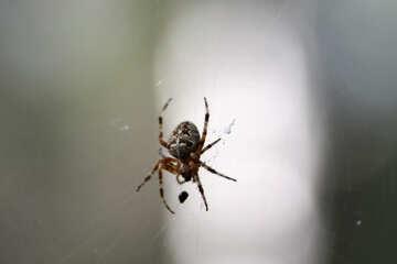 Big spider №5480