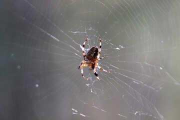 Spider web №5527