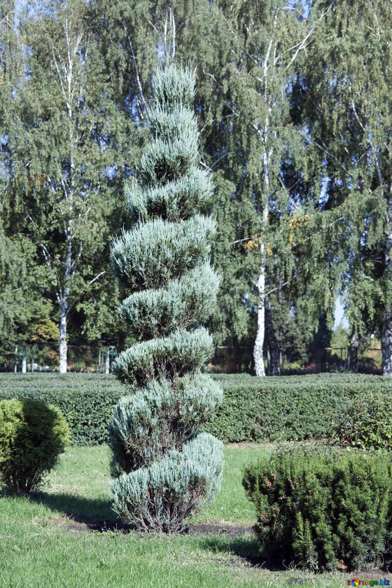 Geben Form Baum №5635