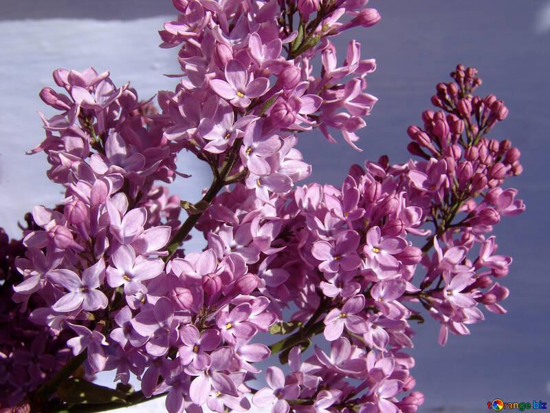 Lilac Bouquet №5259