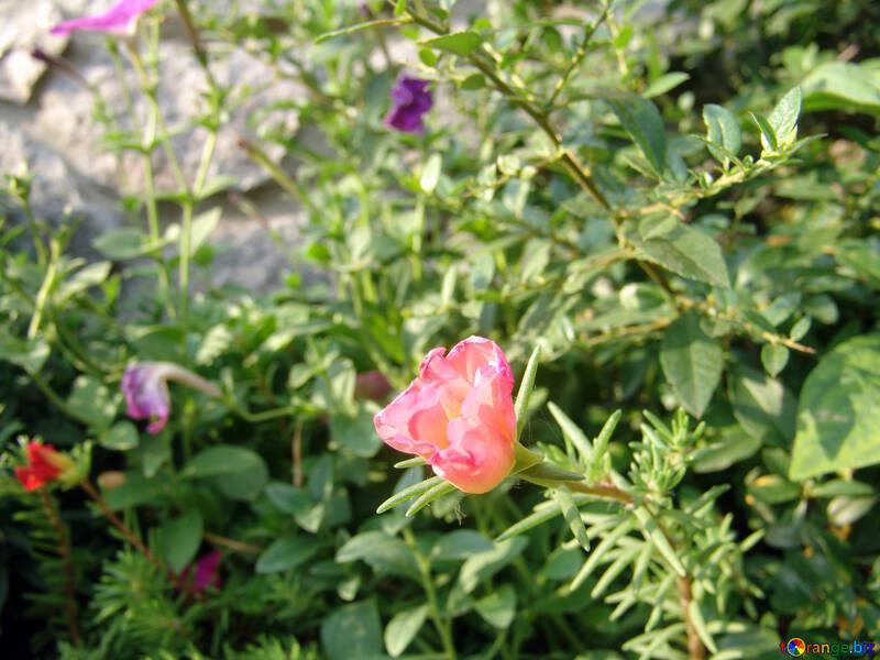 Flowers on the gravel №5818