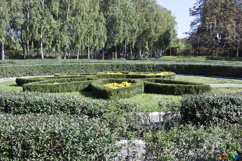 Topiary №5702
