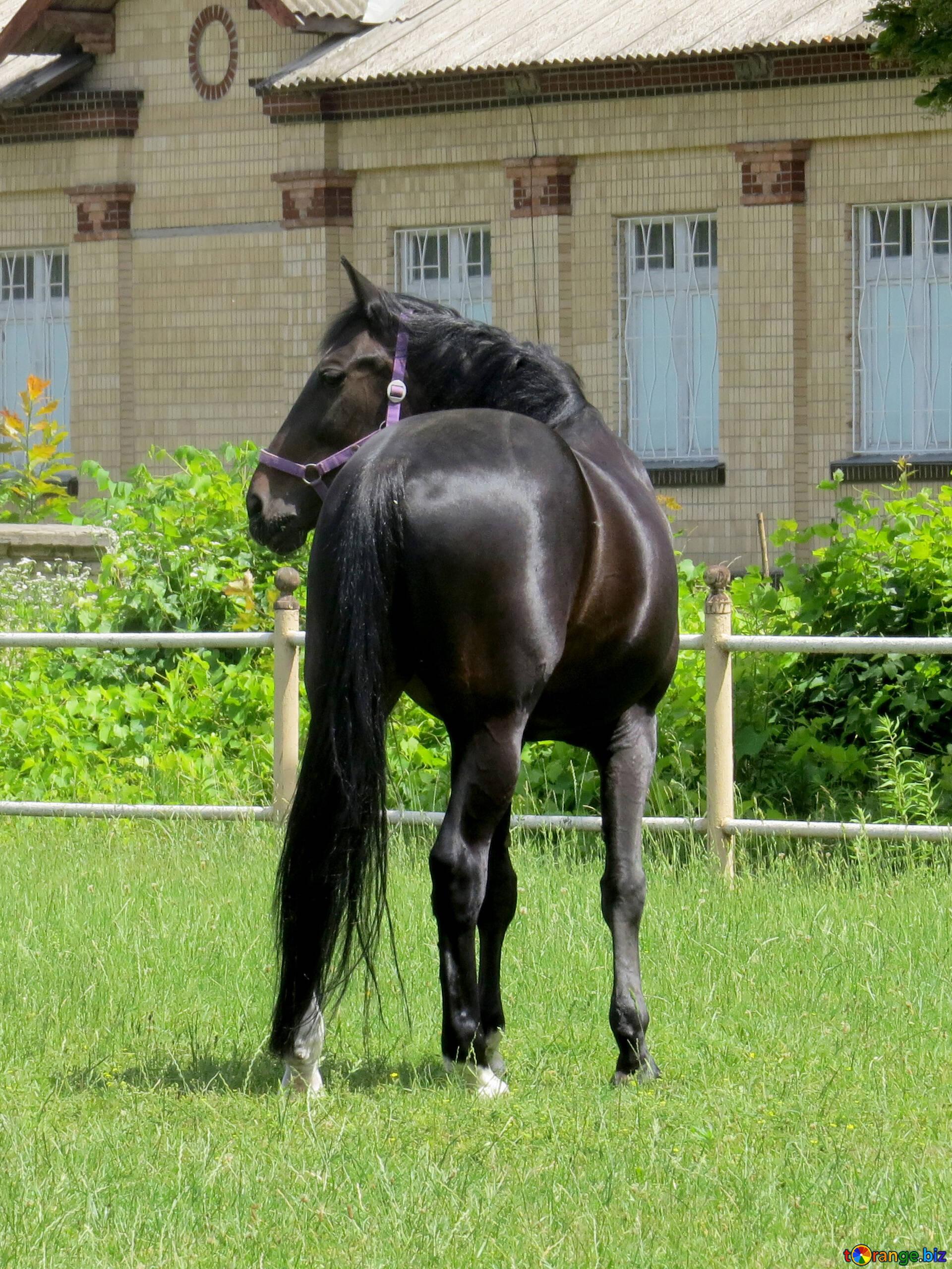 徒歩での馬 無料の写真 馬の後ろ 無料の写真 馬 № 50829   torange.biz