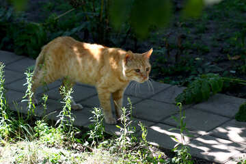 a cat walking in the shade over a plastered garden path №50636
