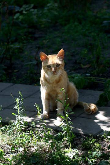 cat on sidewalk outside №50639