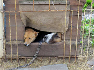 A dog in a cage №50462