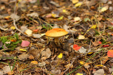 a mushroom on a forest floor №50607