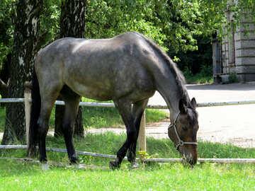Gray  horse №50822