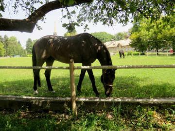 Horse grazing eating grass №50828