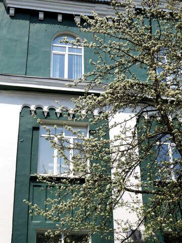 house building windows wall tree №50491