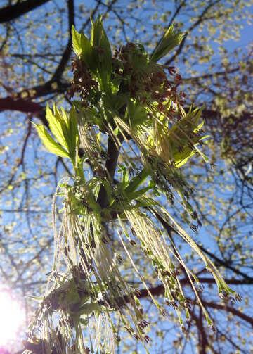 Tree branch spring №50343