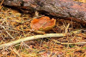 Mushroom log №50616