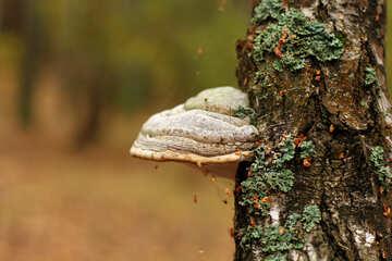tree mushroom №50587