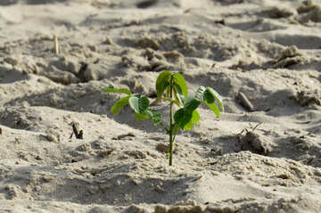 plant leaf in sand №50731