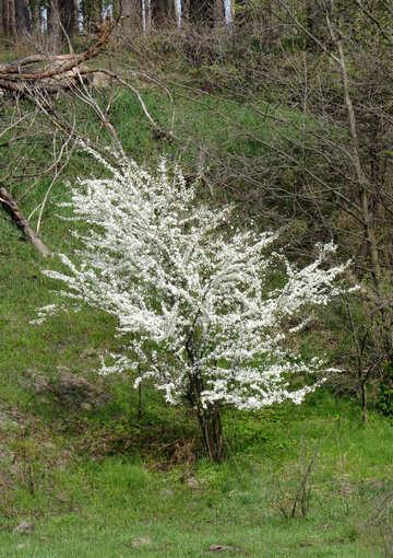 Bush Pflanzenbaum klein №50376