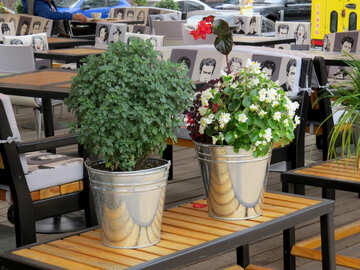 plants two flower pot №50786