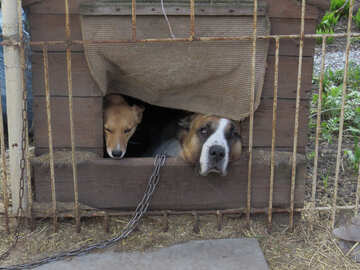 two dogs №50461